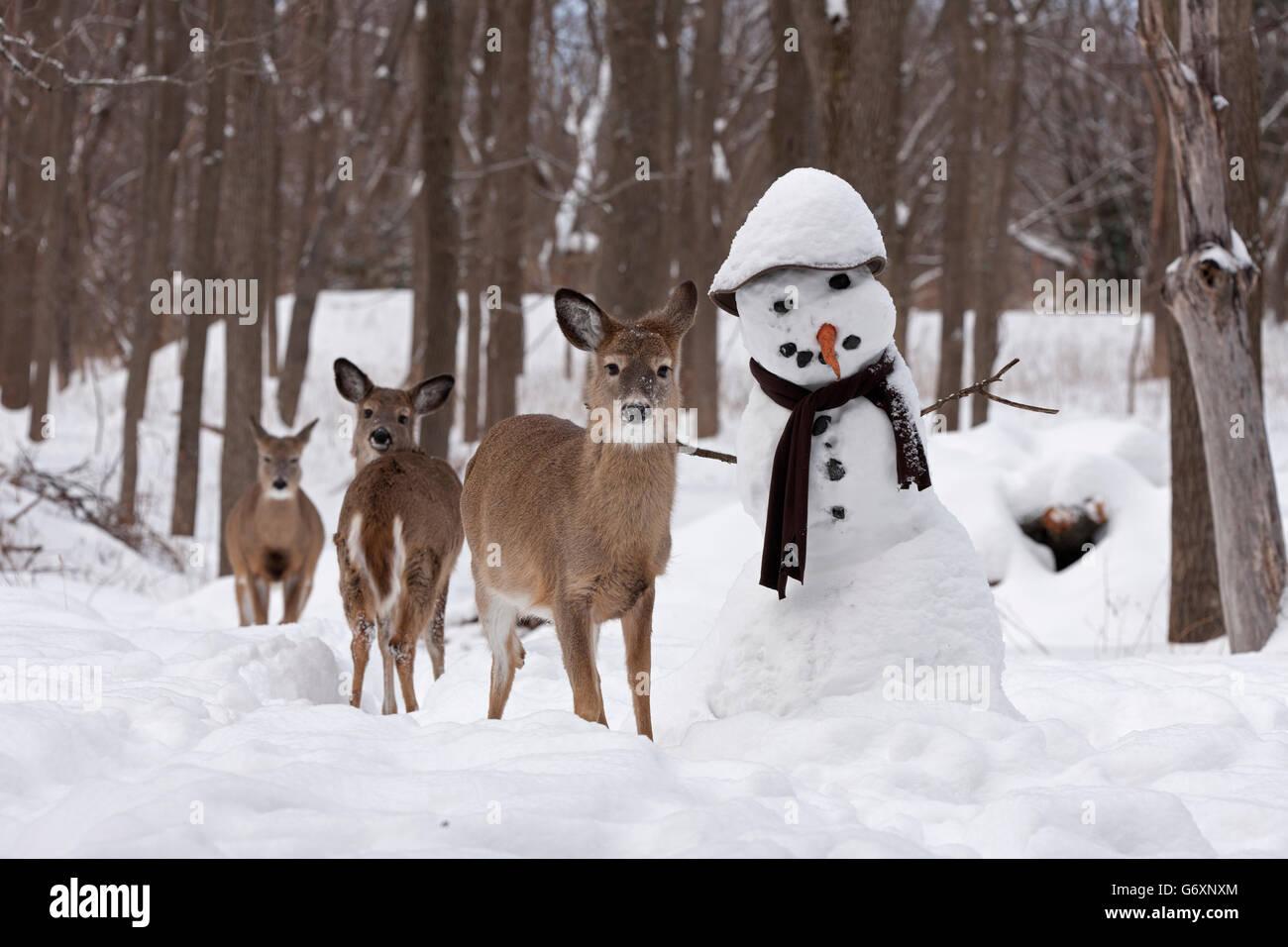 Cervi in inverno, pupazzo di neve Immagini Stock