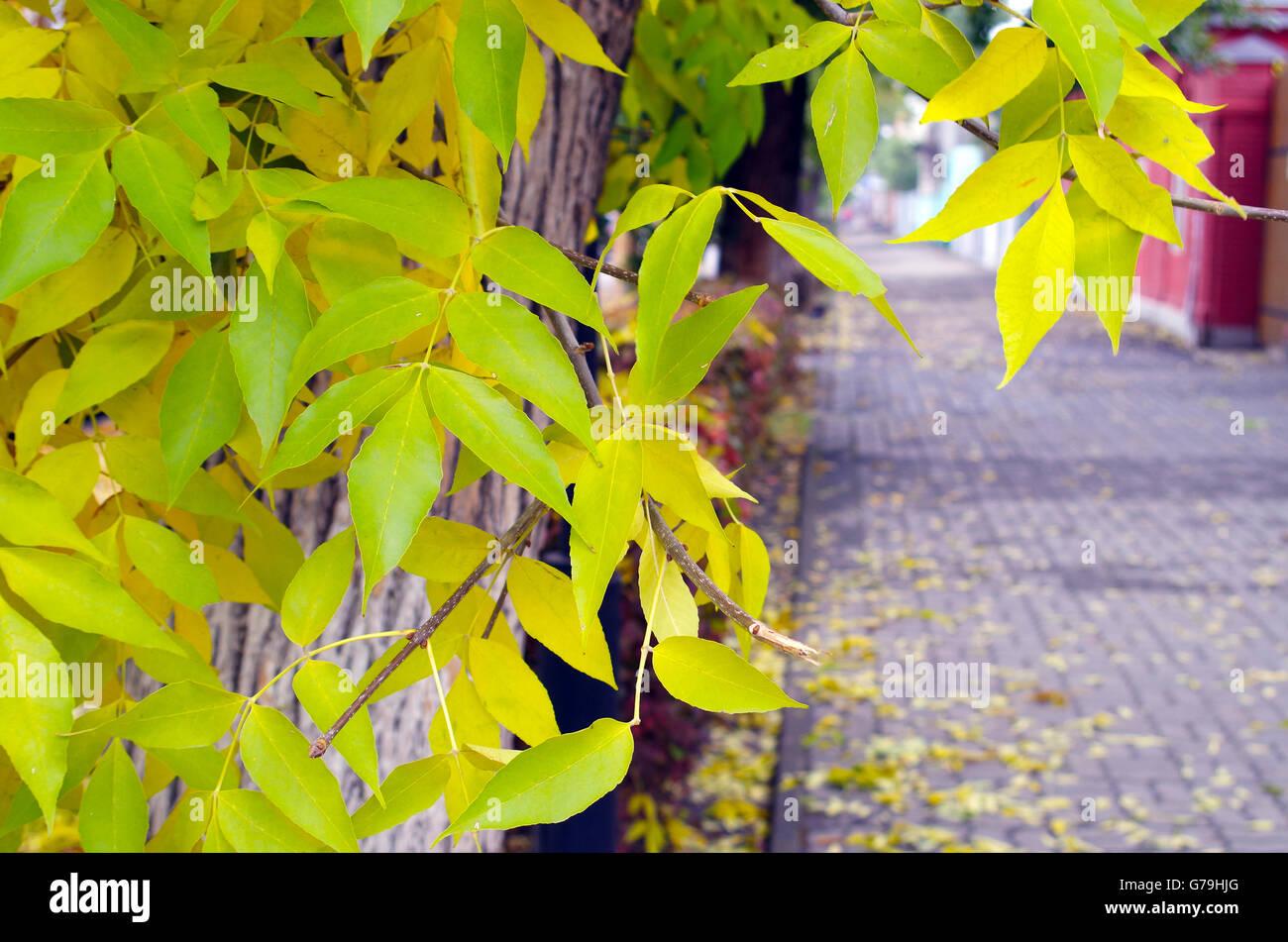 Paesaggio autunnale per le strade cenere con foglie di giallo e