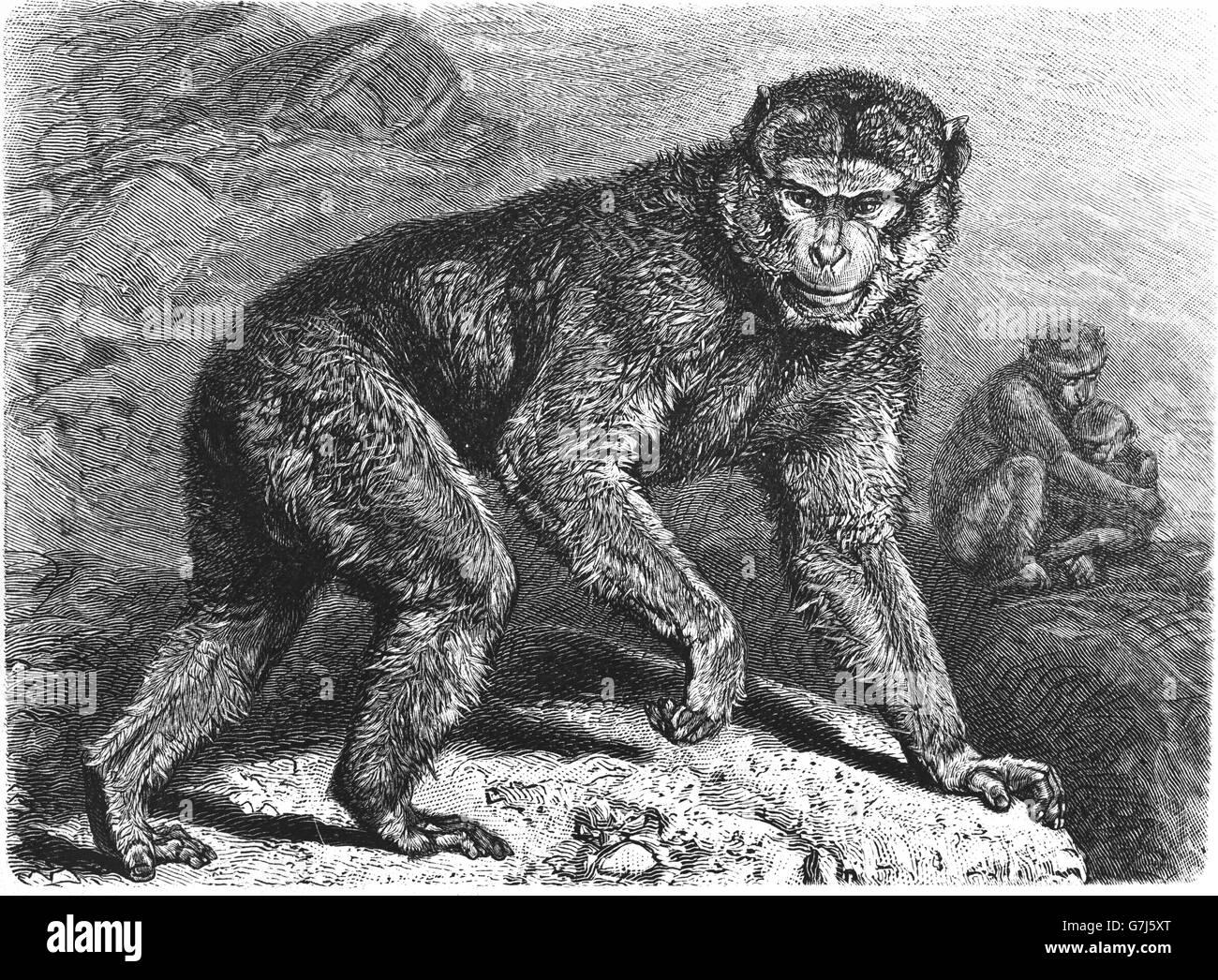 scimmia datazione siti di incontri internazionali gratis