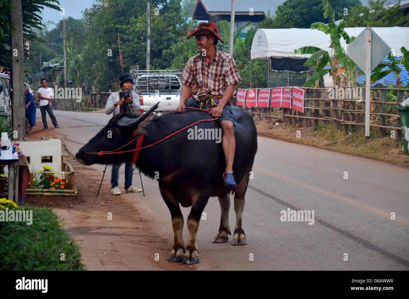 Uomo di Phu thai equitazione etnico buffalo sulla strada tour attorno al divieto nessuno Hom di mattina tempo on Foto Stock