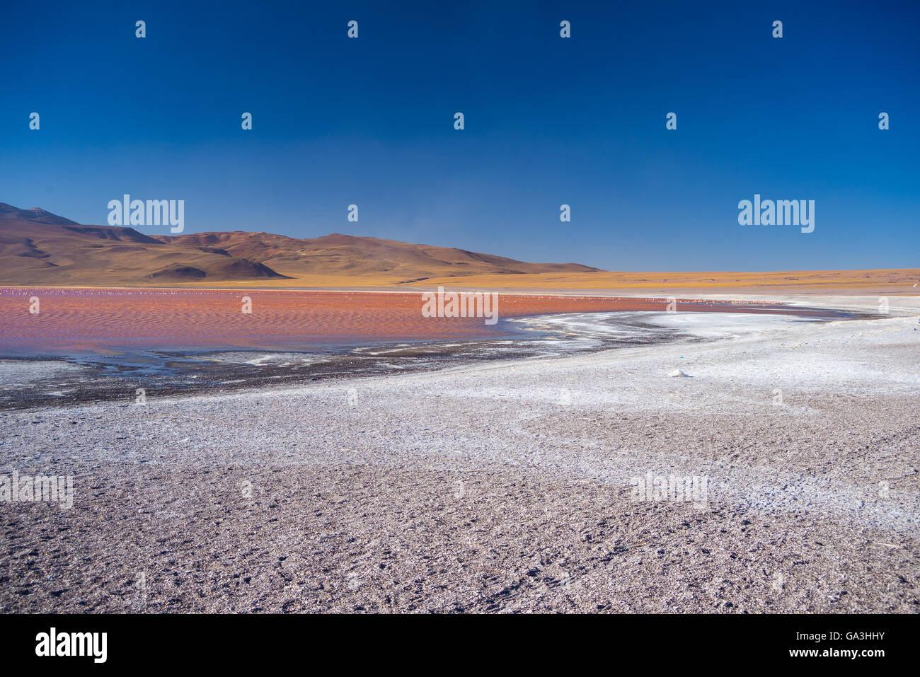 """Ampio angolo di visione di """"Laguna Colorada', multicolore di Salt Lake con fenicotteri, sulla strada per Immagini Stock"""
