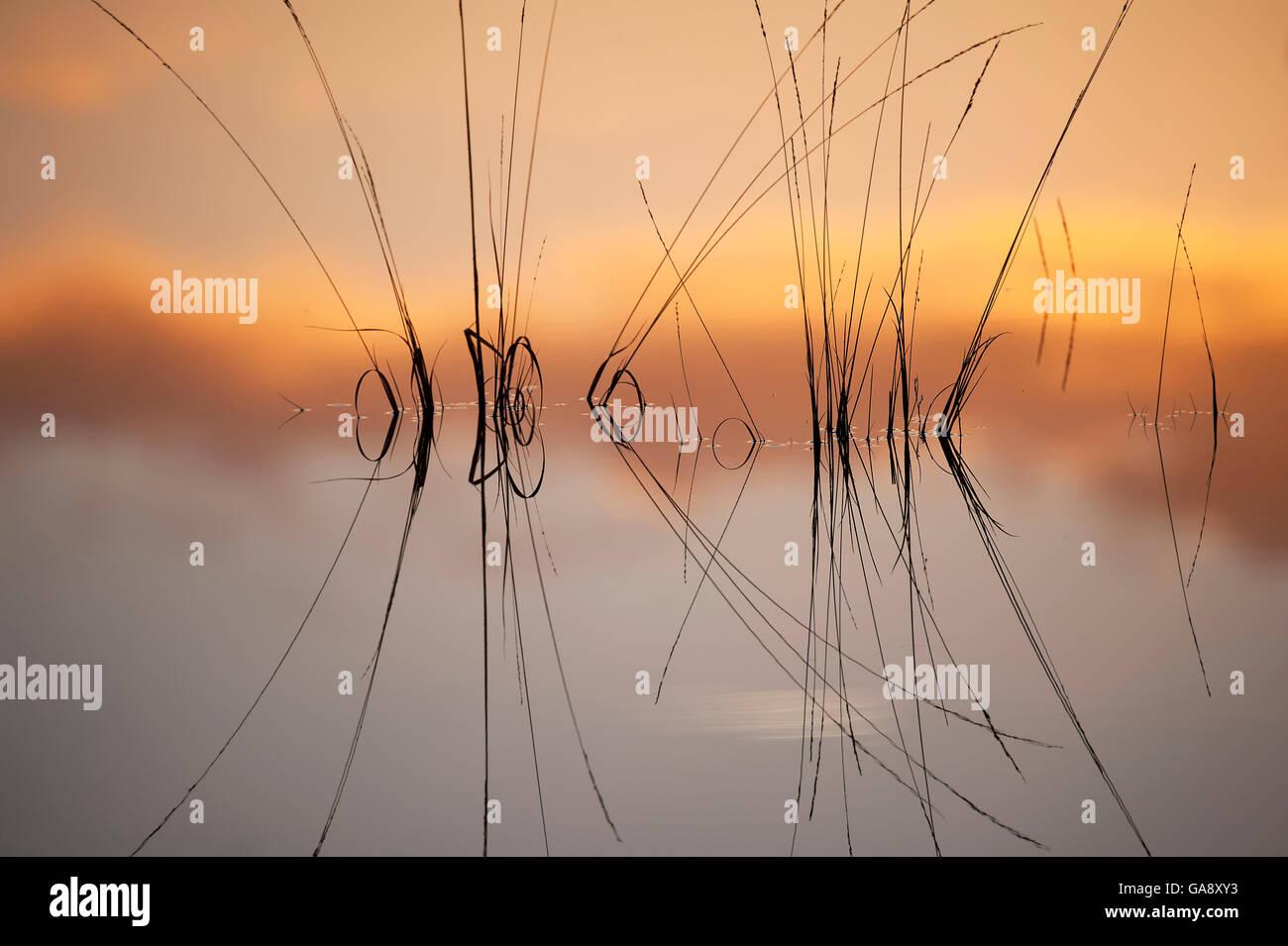 La riflessione in fen sulla superficie dell'acqua, Klein Schietveld, Brasschaat, Belgio, Novembre. Immagini Stock
