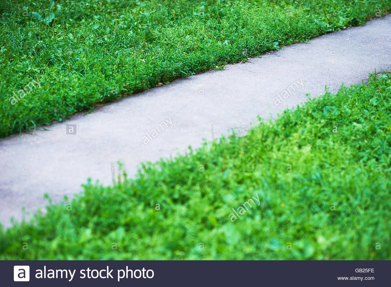Diagonale Il Sentiero Del Parco Con Prato Verde Hd Sfondo Foto