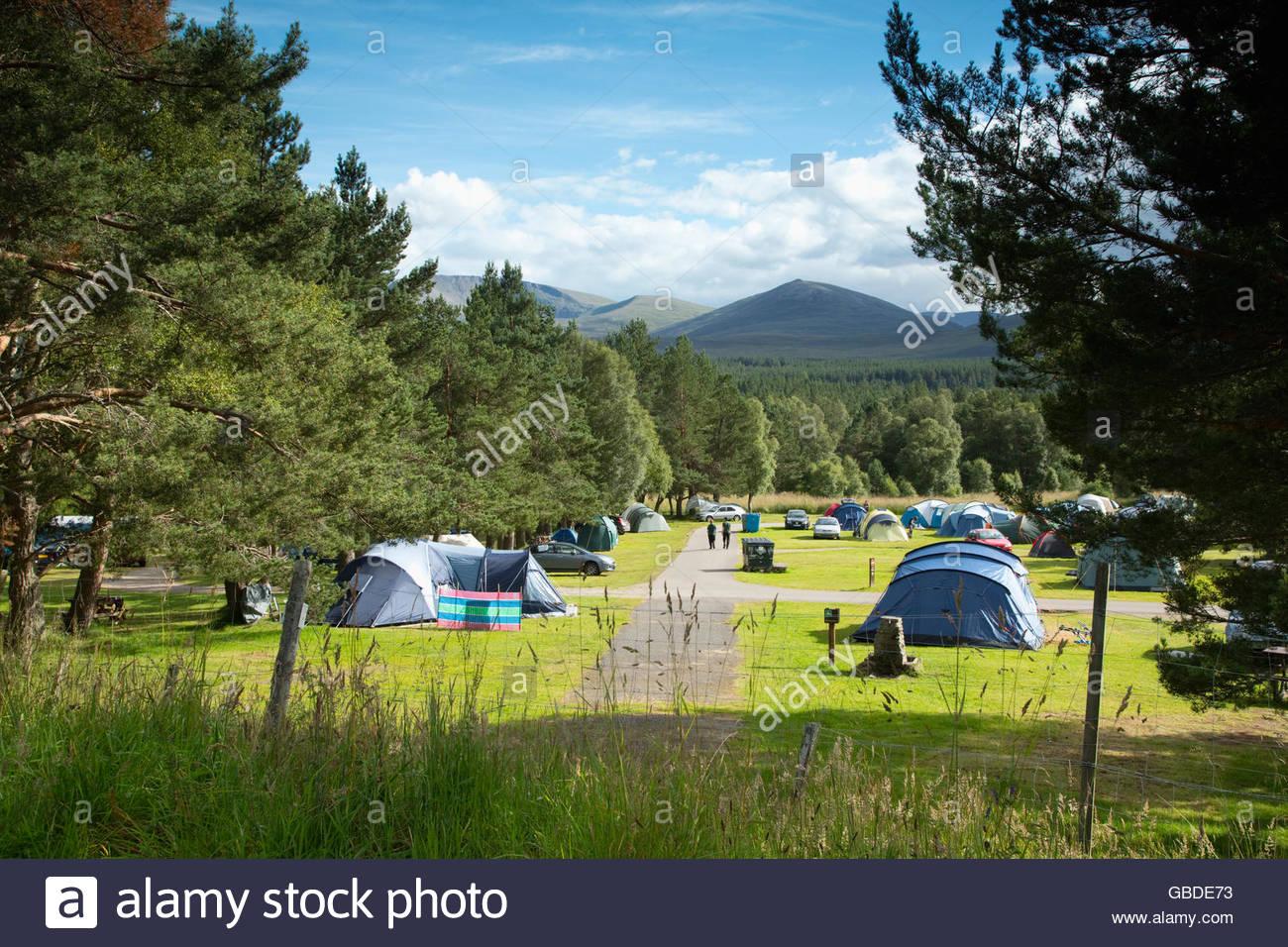 Il campeggio occupato a Glenmore Forest Park vicino a Aviemore, Highlands della Scozia. Immagini Stock