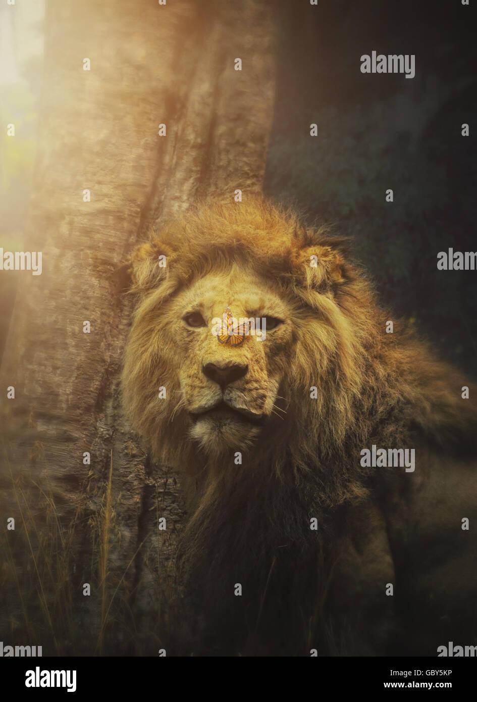 Un leone selvaggio animale ha una stupenda farfalla sul naso di mammiferi con raggi del sole della luce per una Immagini Stock