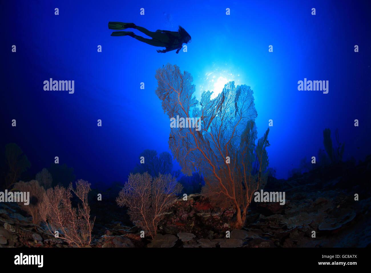 Scuba Diver esplora tropical Coral reef Immagini Stock