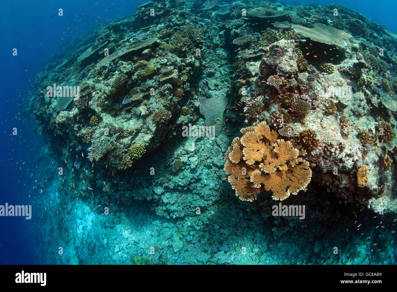 Tropical Coral reef in Oceano Indiano Immagini Stock