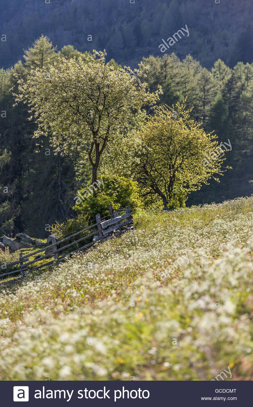 Prato di fiori e alberi di fioritura in Alto Adige Foto & Immagine ...
