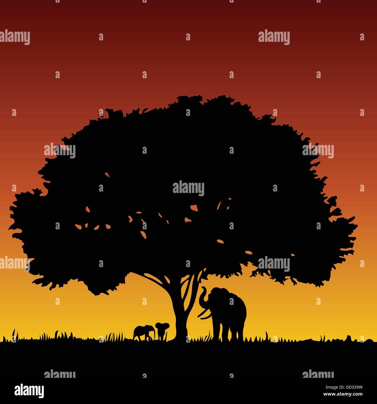 Selou t shirt stampata per bambini con stampa elefanti in stile