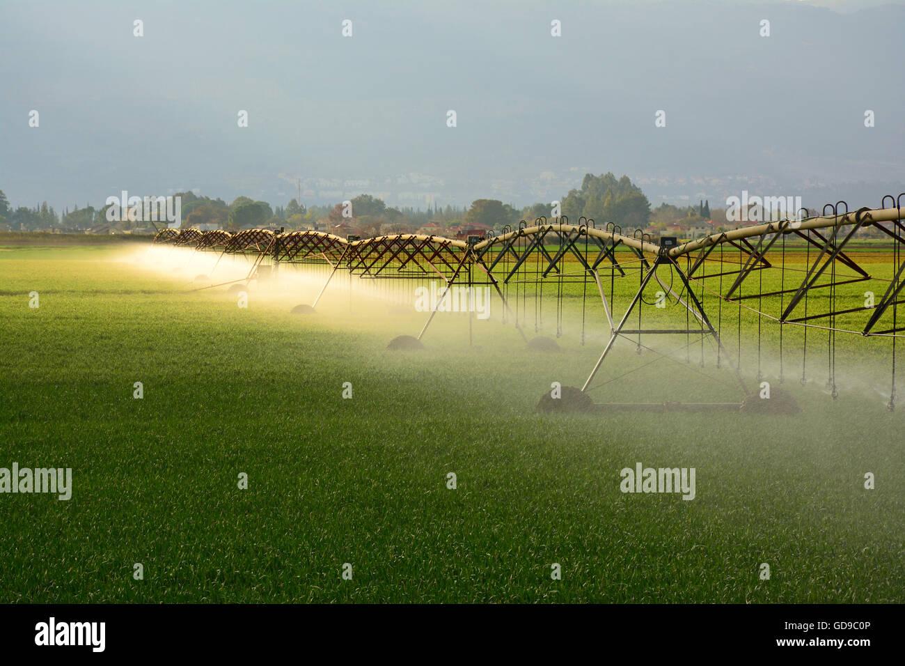 Acqua irrigua , Agricoltura Immagini Stock