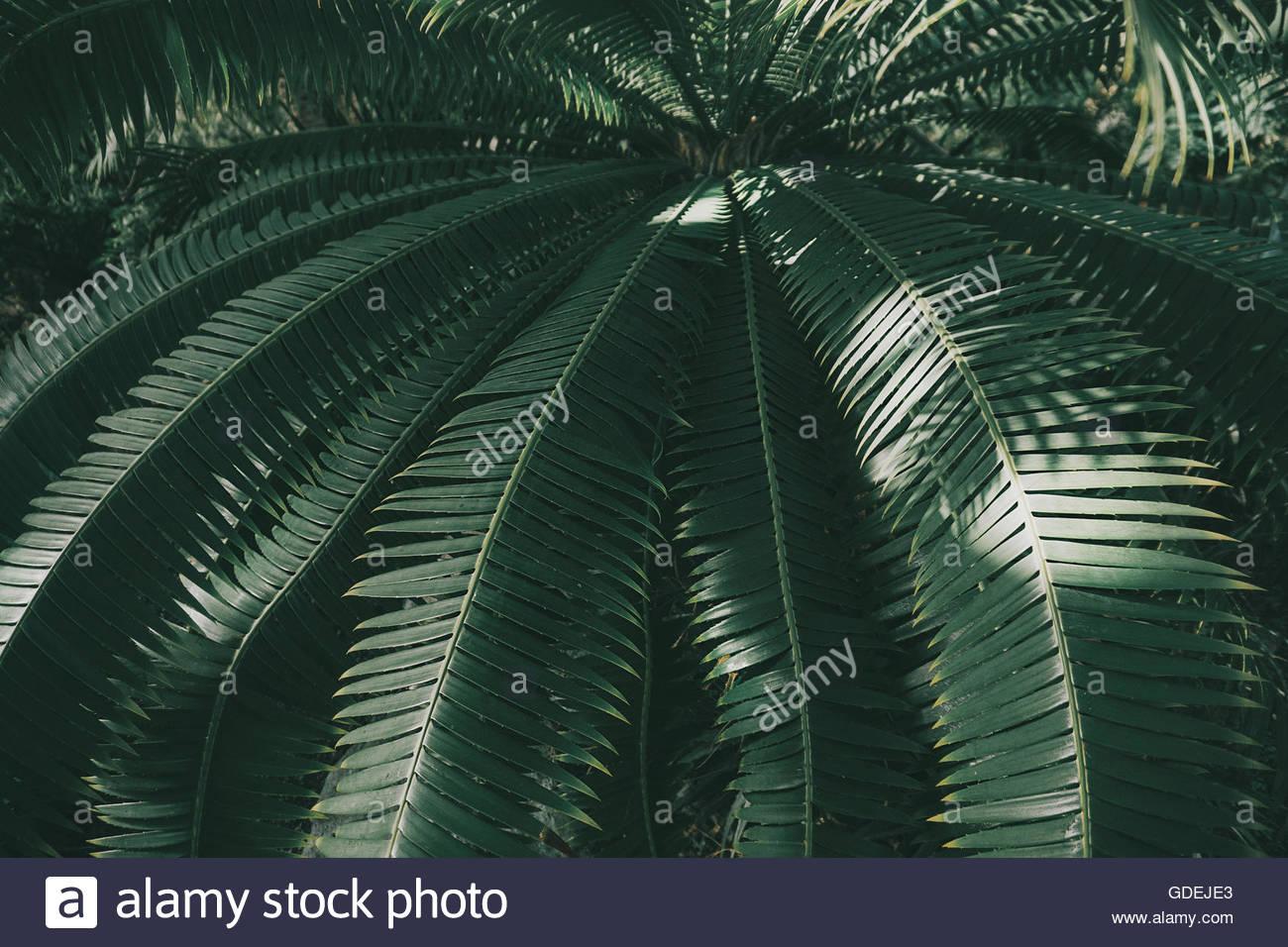 Basso angolo di vista Palm tree Immagini Stock