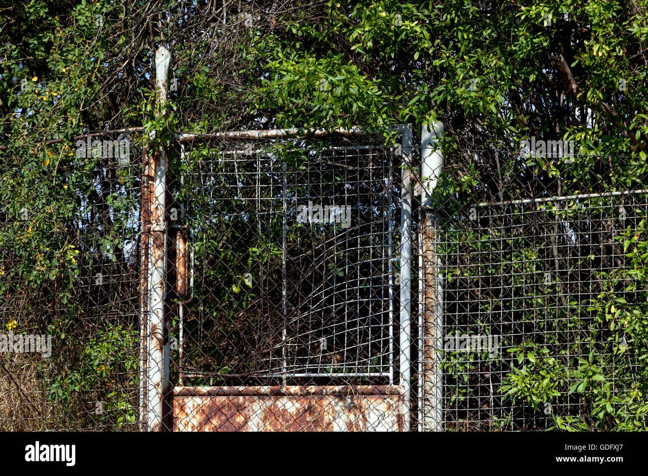 Incarniti porte arrugginite e una recinzione, giardino Immagini Stock