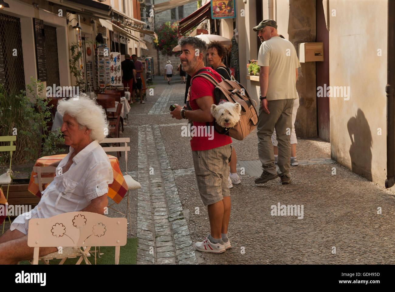 Cane essendo portati in borsa a tracolla in Francia. HOMER SYKES Immagini Stock