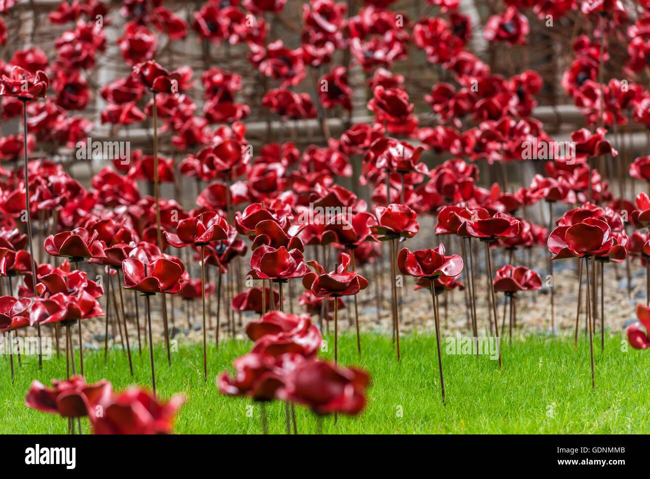 Un campo di papaveri in pianto la finestra di visualizzazione al Black Watch Museum di Perth in Scozia Immagini Stock