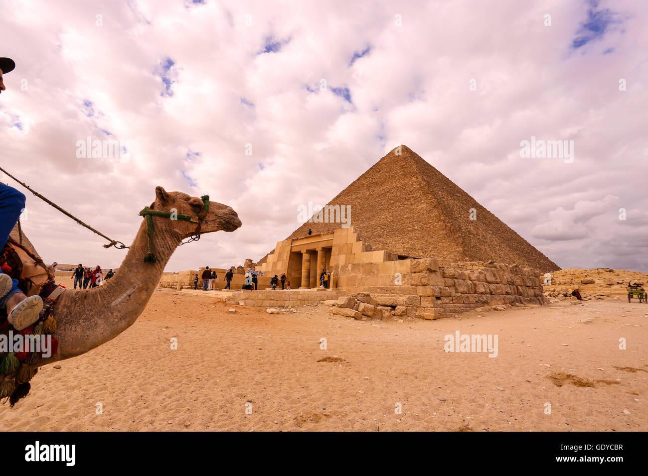 Camel & driver presso le Piramidi di Giza, il Cairo, Egitto Immagini Stock