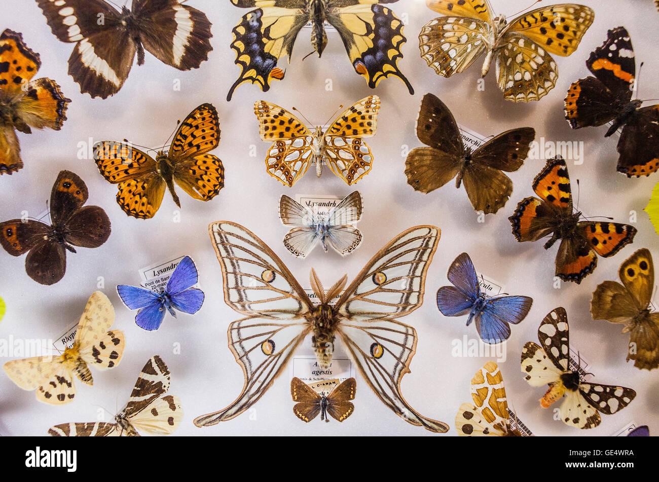 Il Museu Blau,il Museo di scienze naturali,farfalle della Catalogna . Edificio progettato da Jacques Herzog e Pierre Immagini Stock