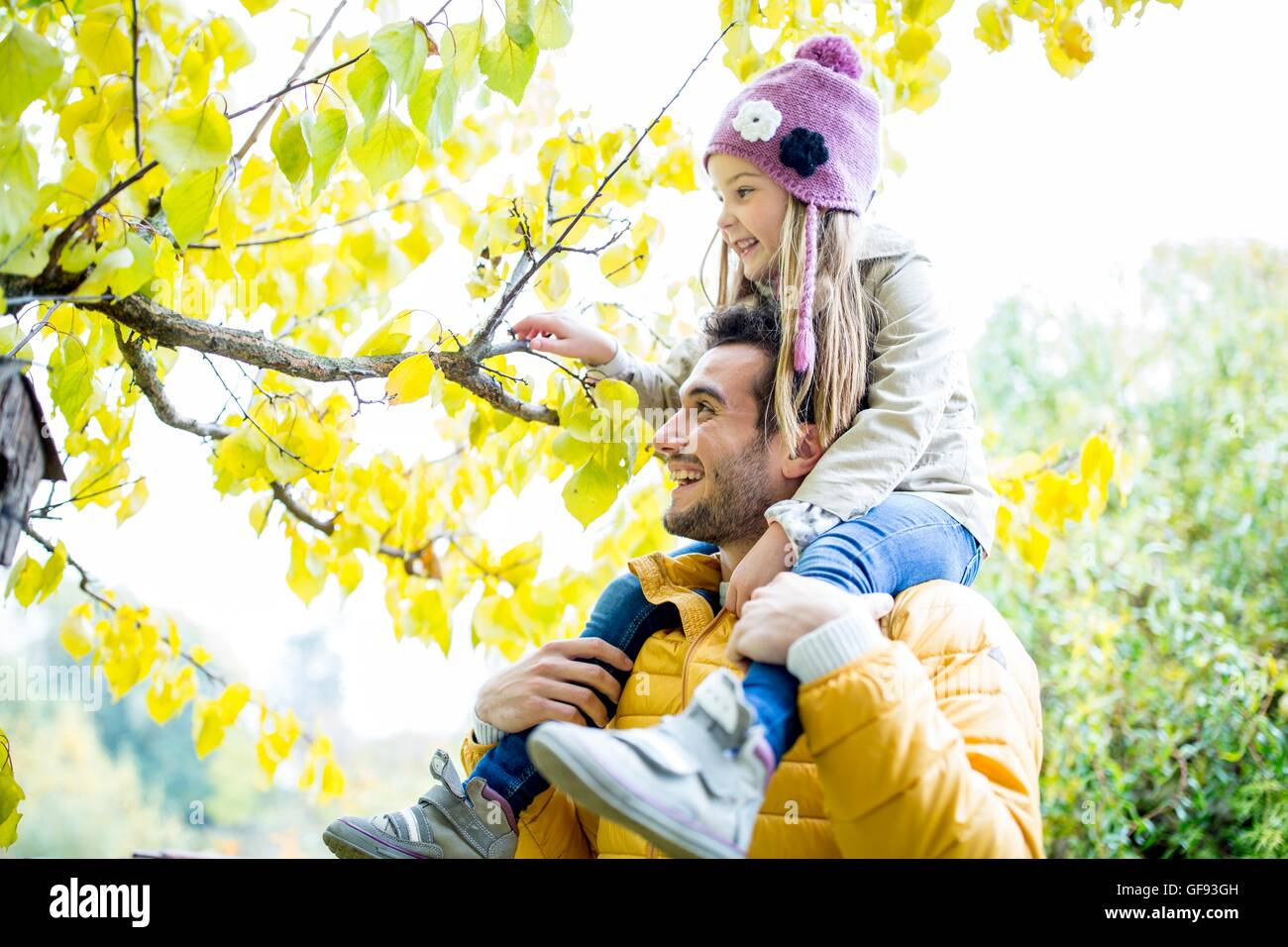 Modello rilasciato. Padre figlia che porta sulle spalle e guardando il ramo in autunno. Immagini Stock