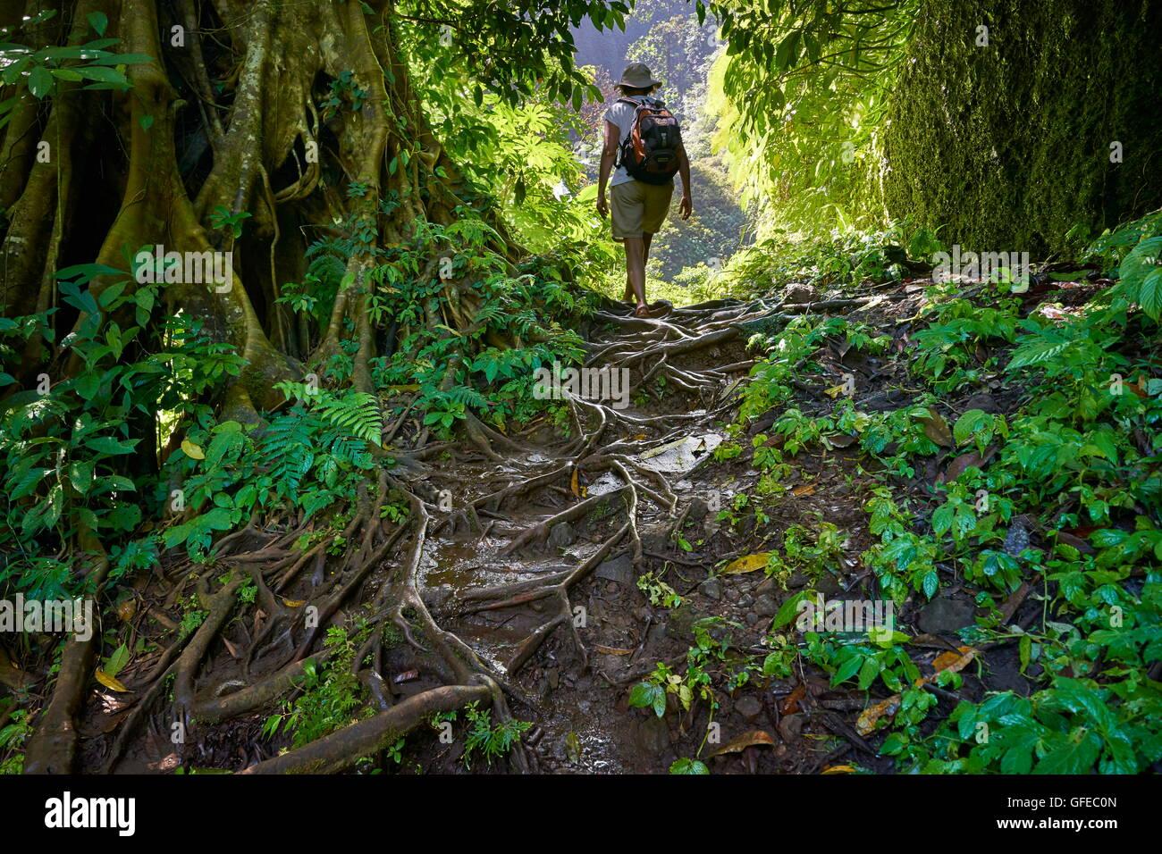 Tourist trekking attraverso la foresta tropicale, Bali, Indonesia Immagini Stock