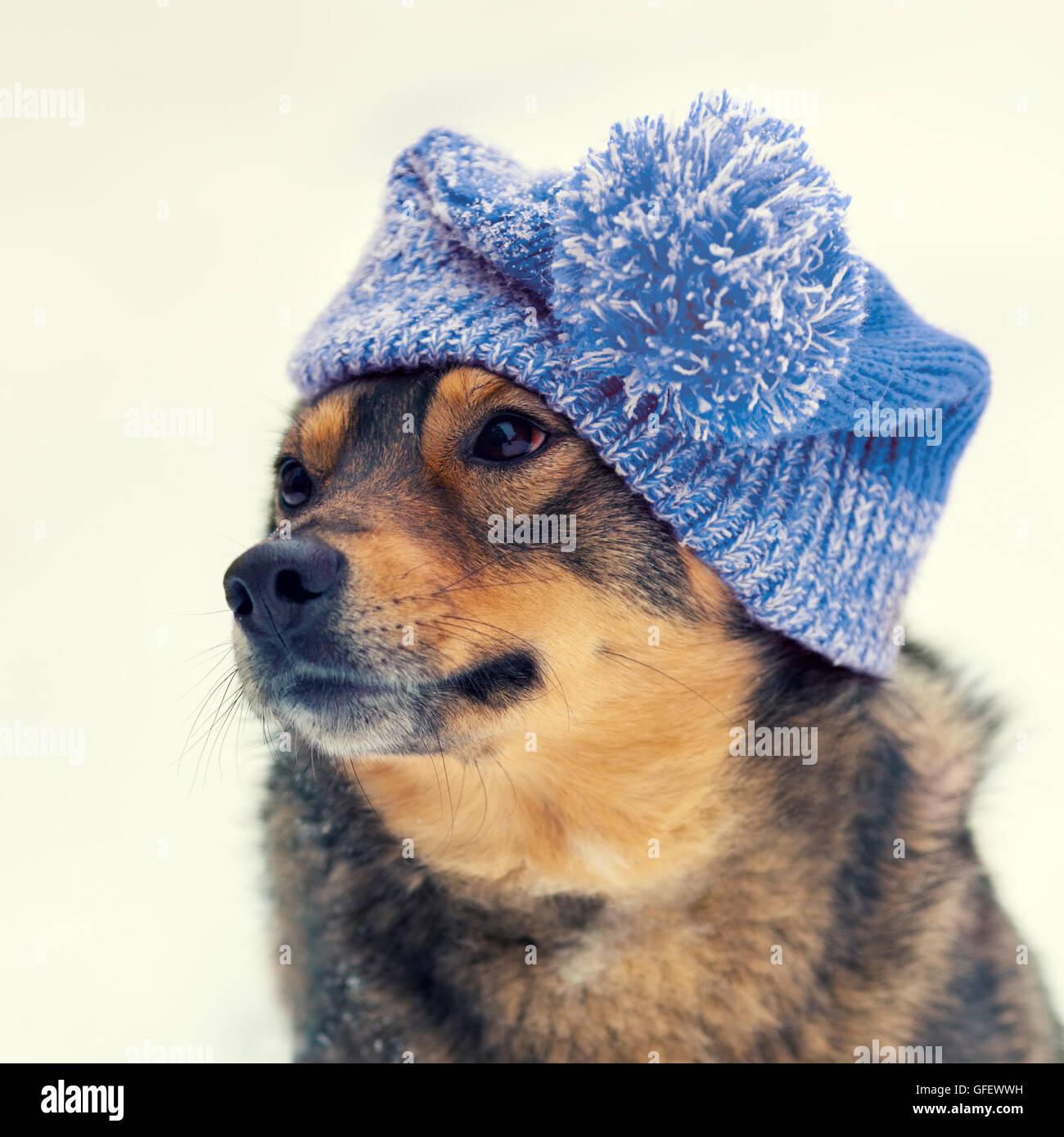 Ritratto del cane indossando berretto lavorato a maglia in inverno ... 6ad06389d055