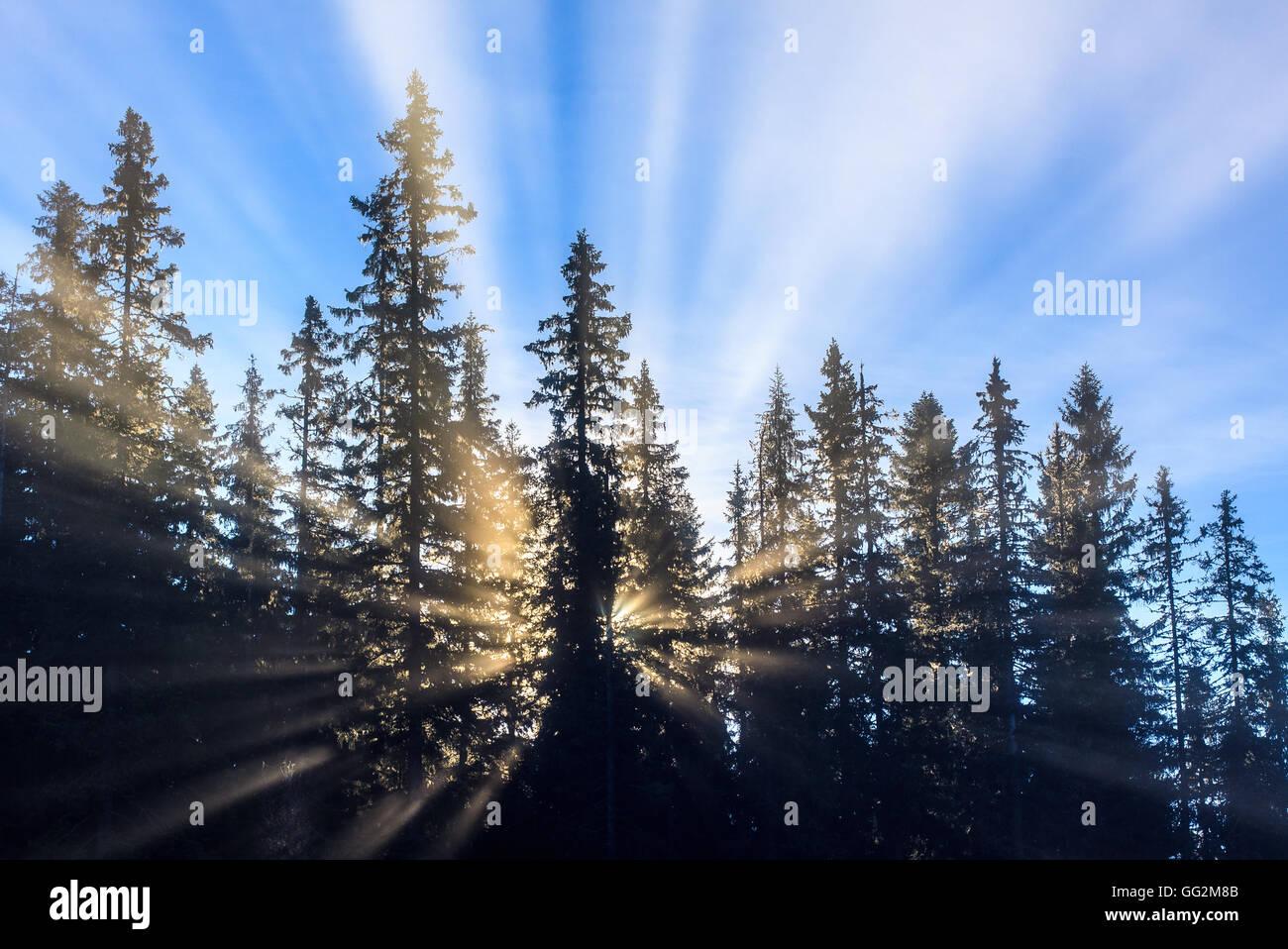 Sun crea raggi di luce attraverso la nebbia di mattina, guardando come un esplosione dietro gli alberi. Immagini Stock
