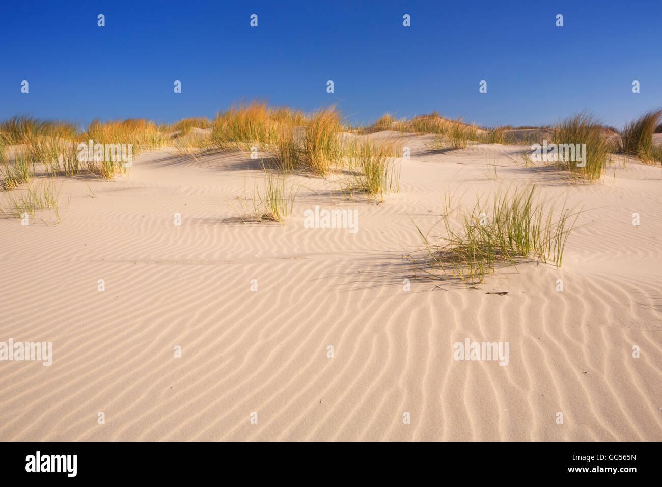 Le dune di sabbia con le increspature sulla isola olandese di Terschelling su una luminosa e soleggiata giornata. Immagini Stock