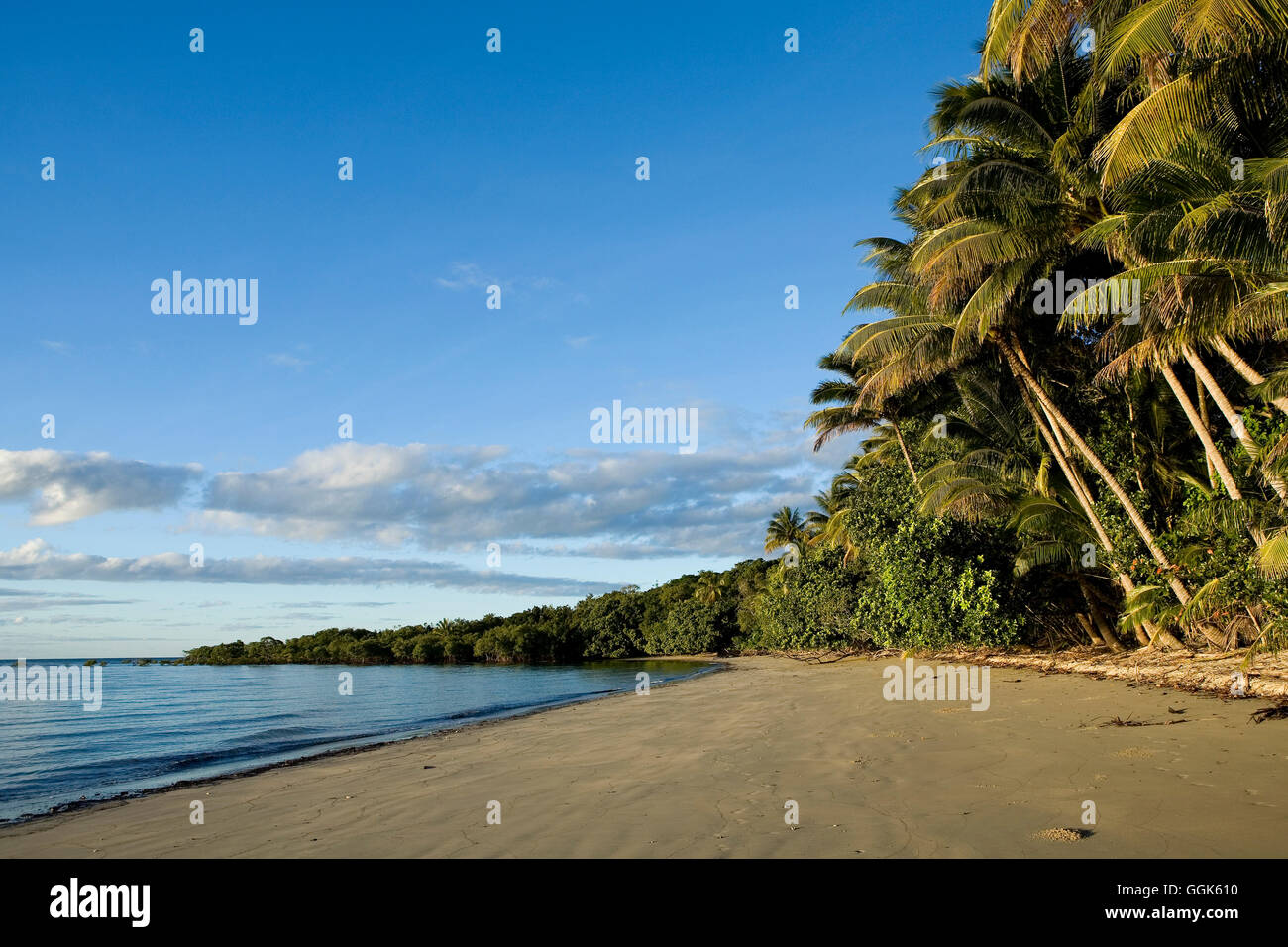 Cape Tribulation Beach con palme, Cape Tribulation, Queensland, Australia Immagini Stock