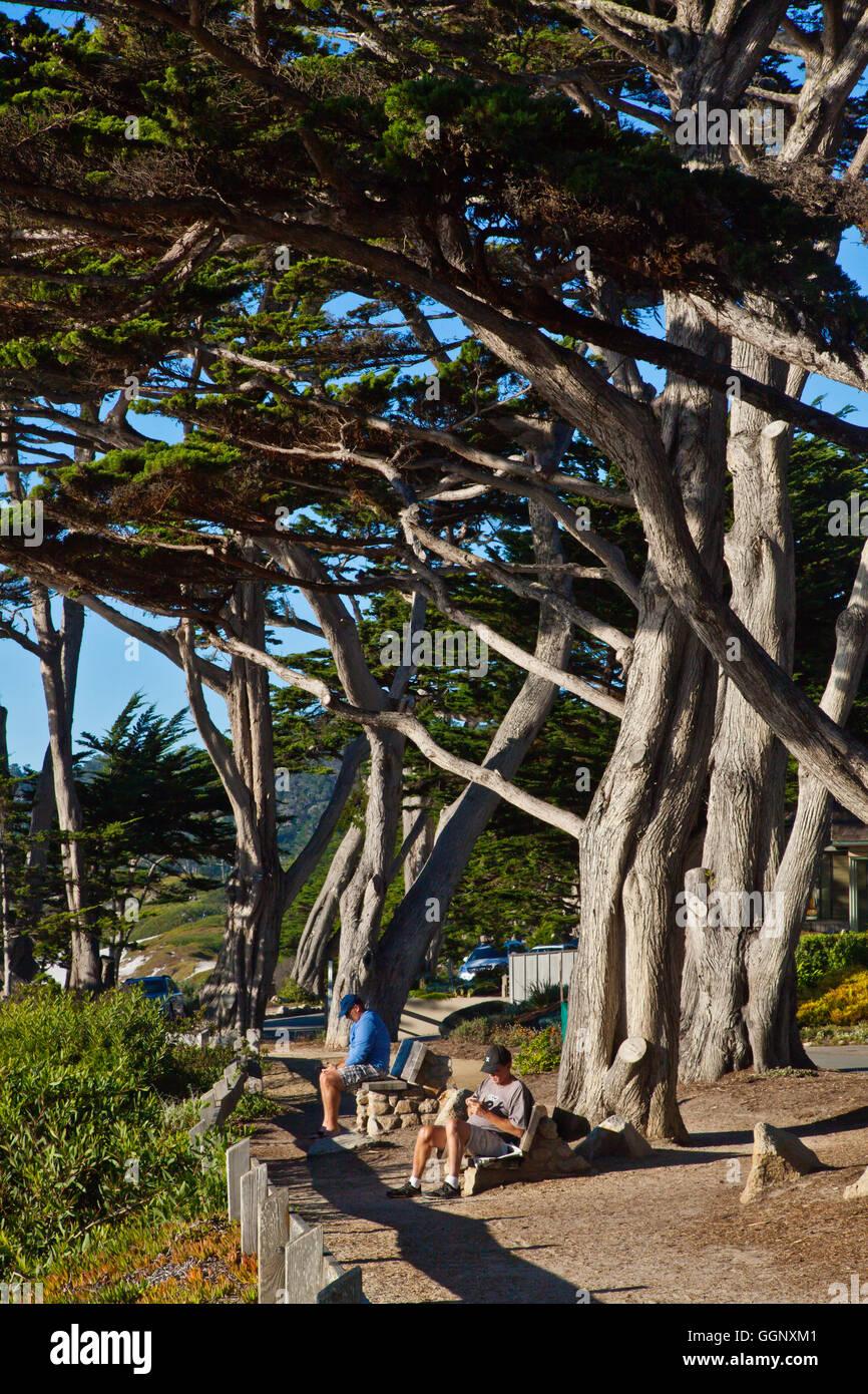 MONTEREY CIPRESSI lungo la Scenic Drive nel Carmelo - California Foto Stock