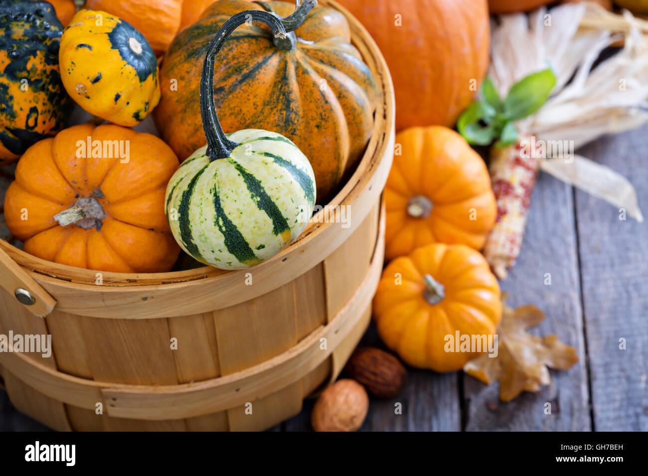 Varietà di coloratissimi zucche decorative in un cestello Immagini Stock
