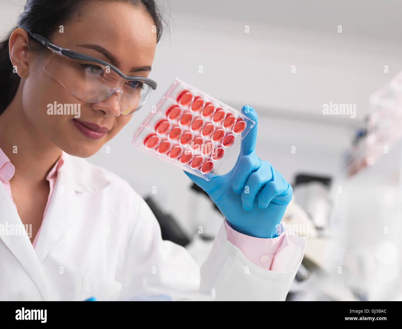 Donna scienziato esaminando le colture cellulari in modalità multi e il vassoio in laboratorio Immagini Stock