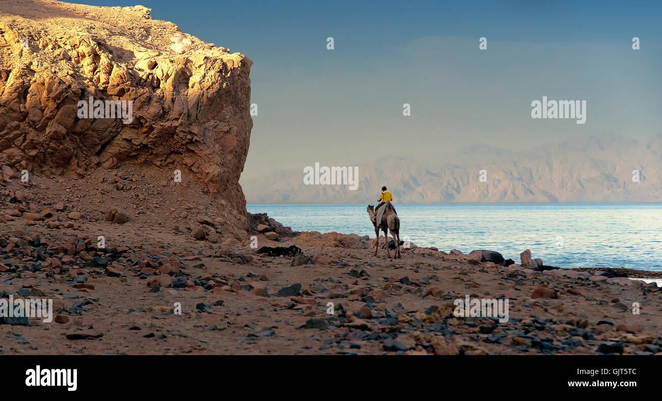 Deserto Deserto africa Immagini Stock