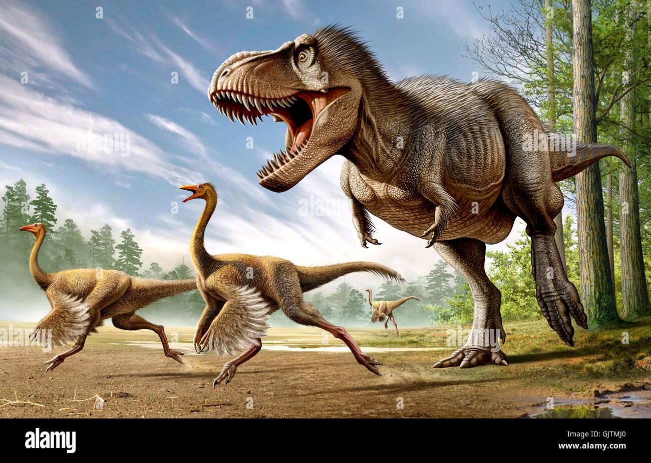 Attaccare Due Foto.Tyrannosaurus Rex Di Attaccare Due Dinosauri Struthiomimus