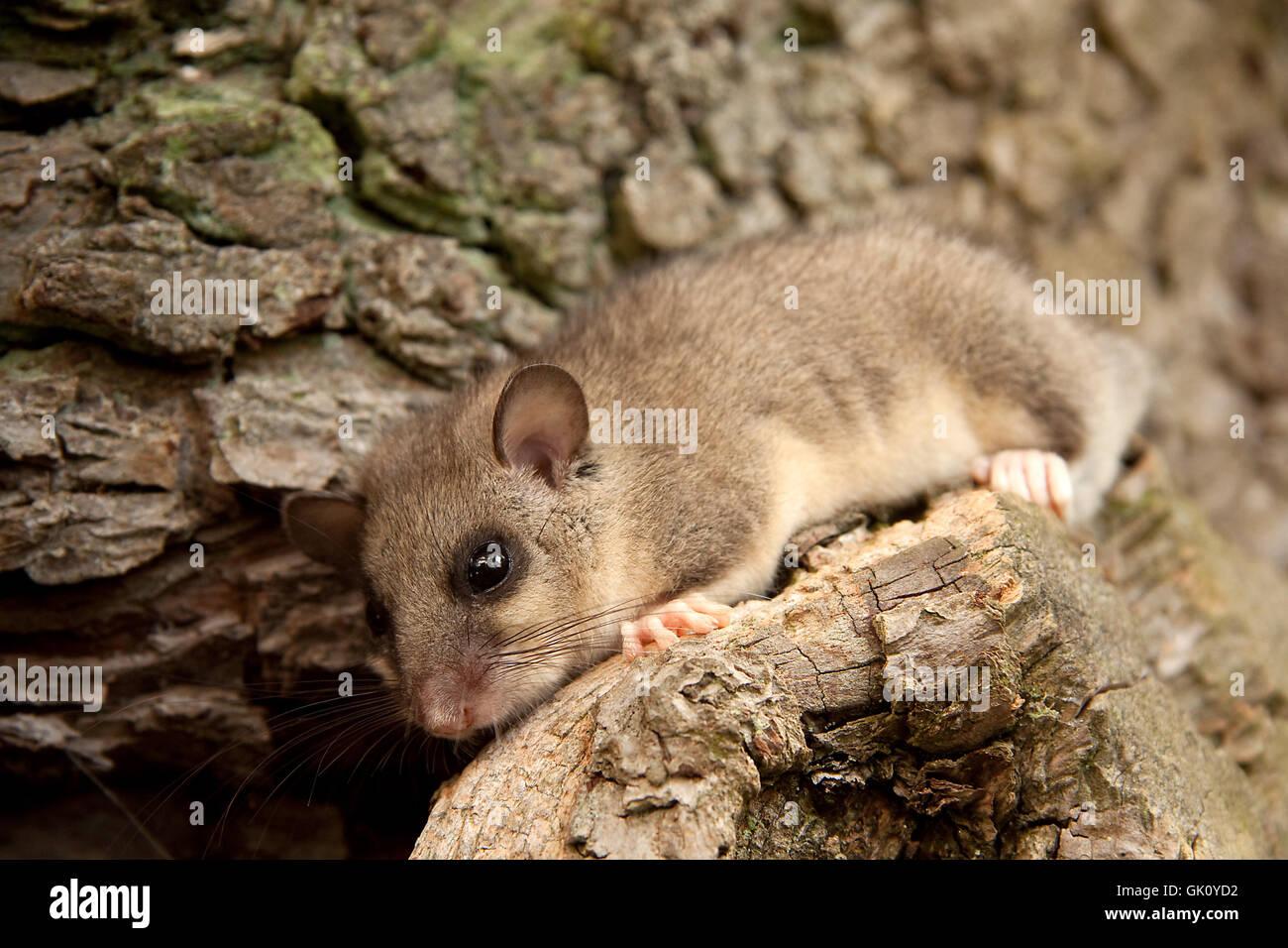 Gli animali ad albero cub Foto Stock