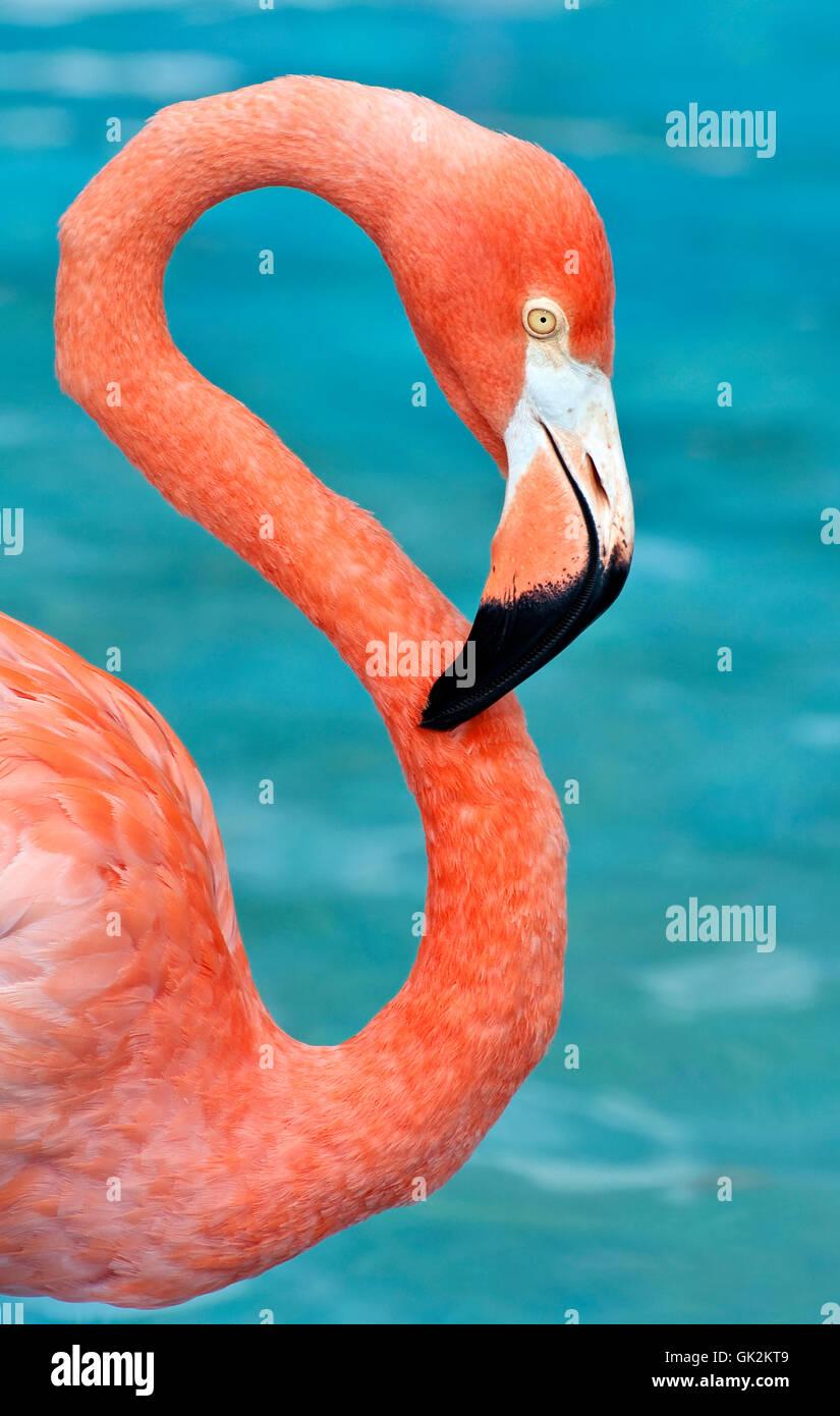 Animale selvaggio degli uccelli Immagini Stock