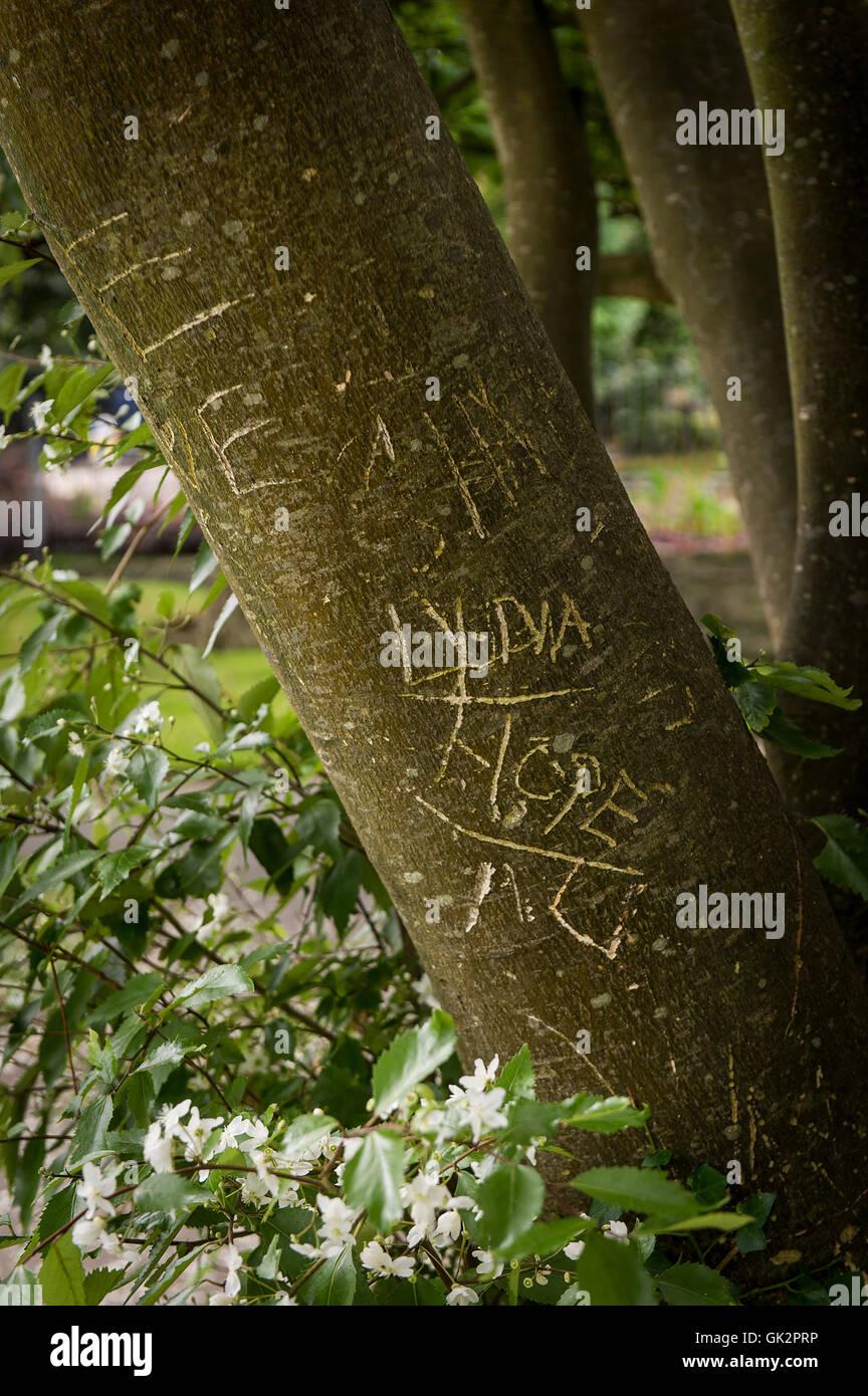 Lettere e parole scolpite nella corteccia di un albero. Immagini Stock
