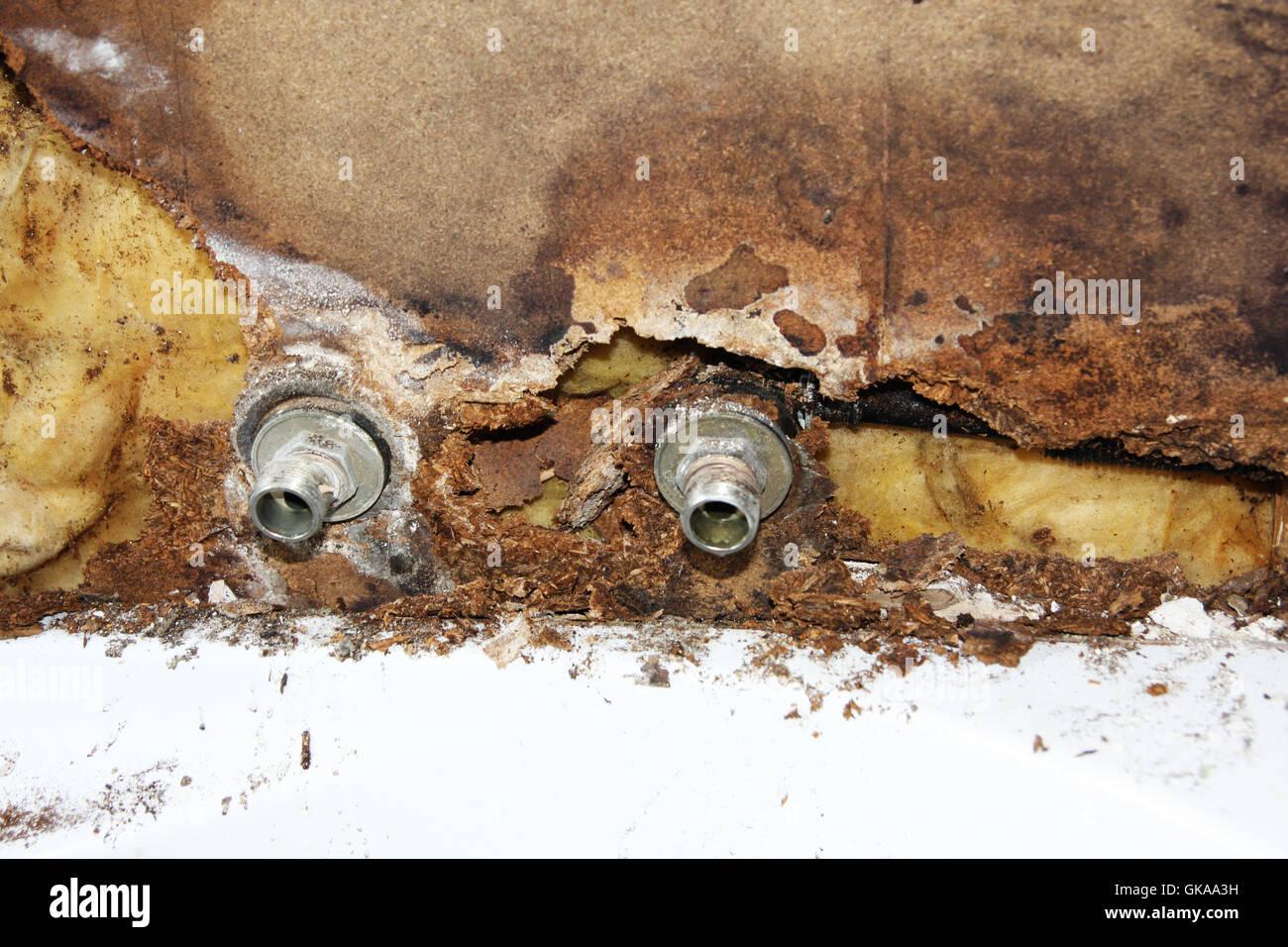 Stampo difettoso sul tubo di acqua Immagini Stock