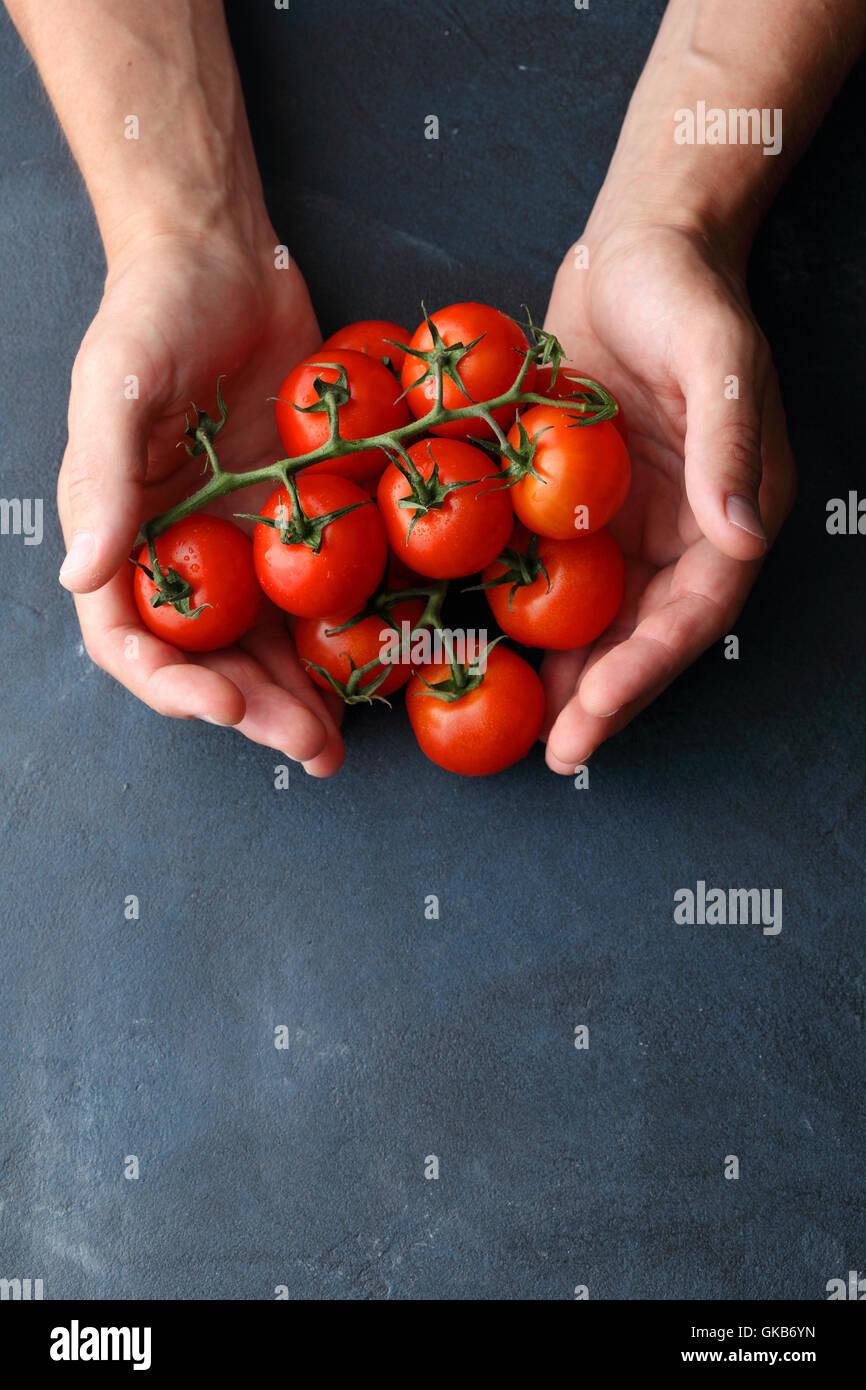 Pomodori filiali in mani dell'uomo, sfondo alimentare Immagini Stock
