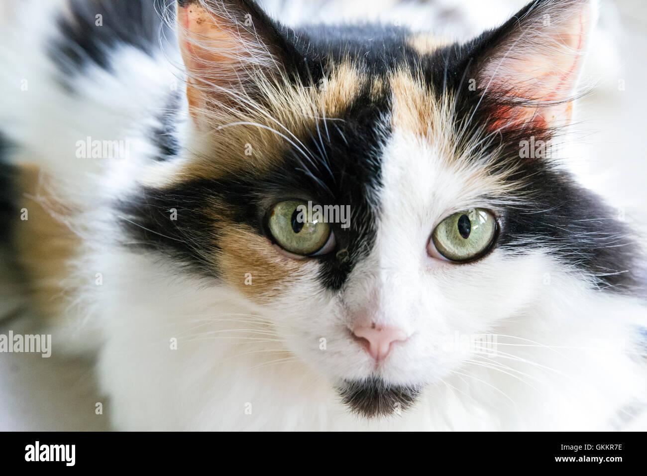 Bella casa Cat Immagini Stock