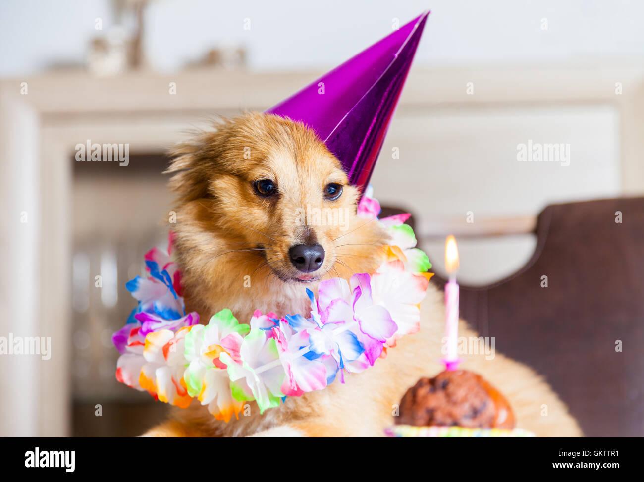 Buon Compleanno Cane Guarda A Candela Foto Immagine Stock