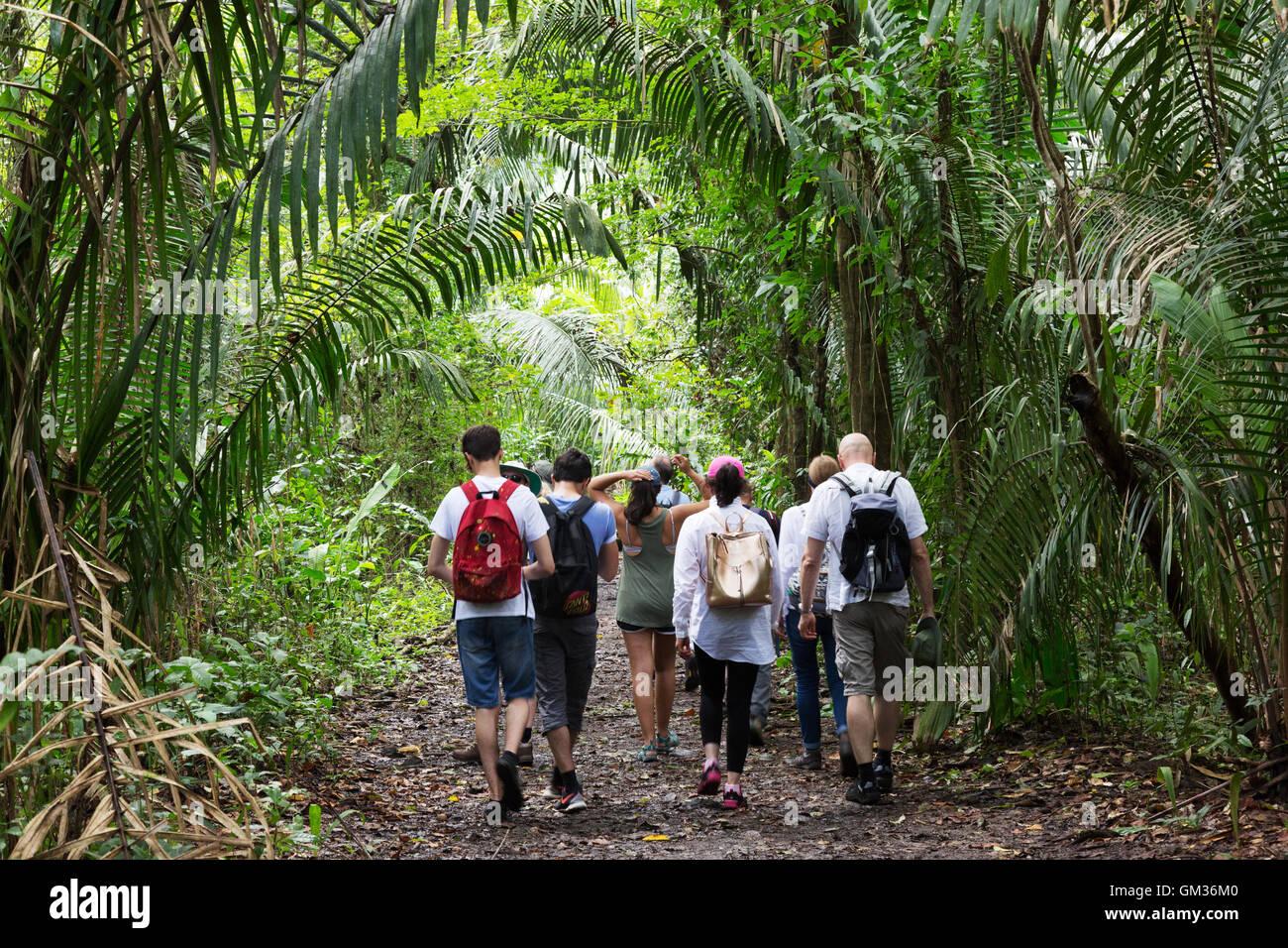 I visitatori a piedi nella foresta pluviale in un tour guidato, Monteverde in Costa Rica, America Centrale Immagini Stock