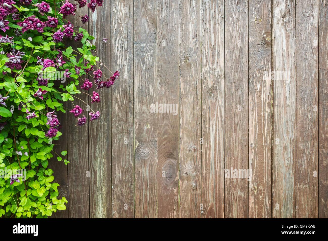 Pareti in legno con fiori decorativi. giardino estivo foto di sfondo