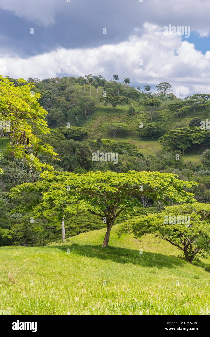 Repubblica Dominicana - paesaggio di montagne, privato terreni per il pascolo, settentrionale DR, sul percorso 21. Immagini Stock