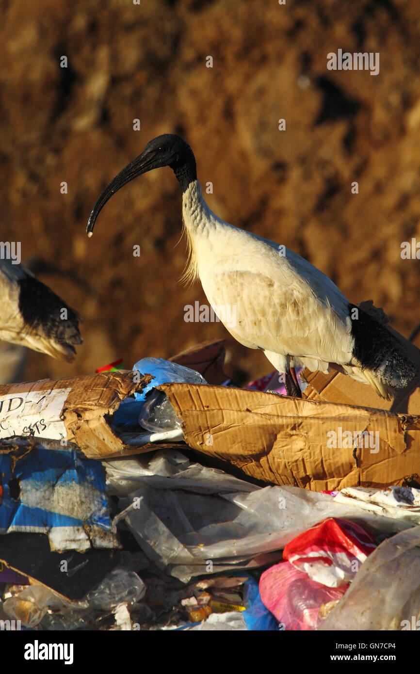 grande uccello bianco trash sesso anale dominazione