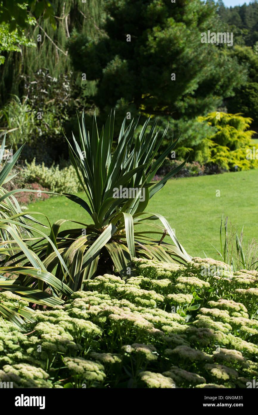 Un Phormium sorge da un fiore giardino confine Foto Stock
