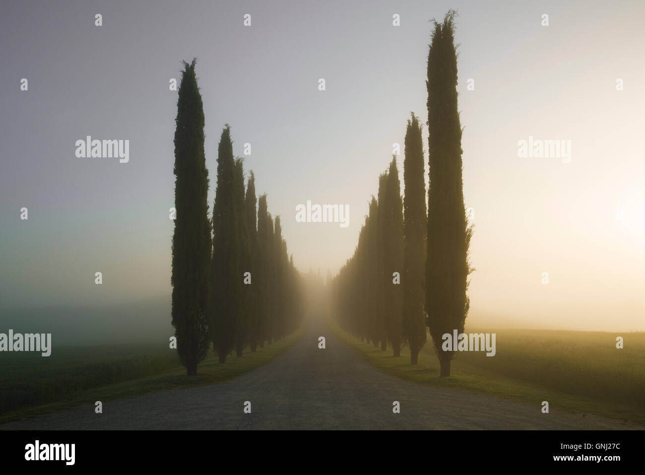 Strade orlate da alberi vicino alla Val d'Orcia, Toscana, Italia Immagini Stock