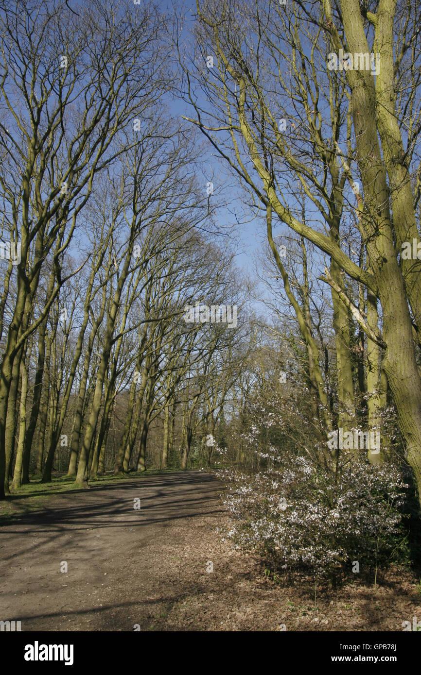 Percorso del bosco in primavera Immagini Stock
