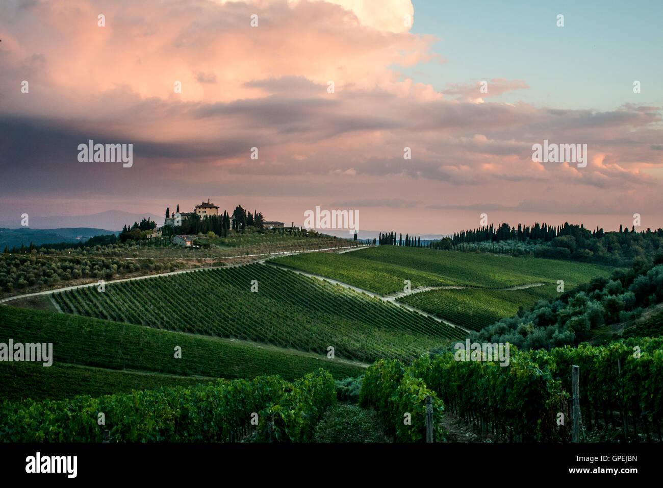 Guardare oltre il vigneto in Toscana al tramonto Foto Stock