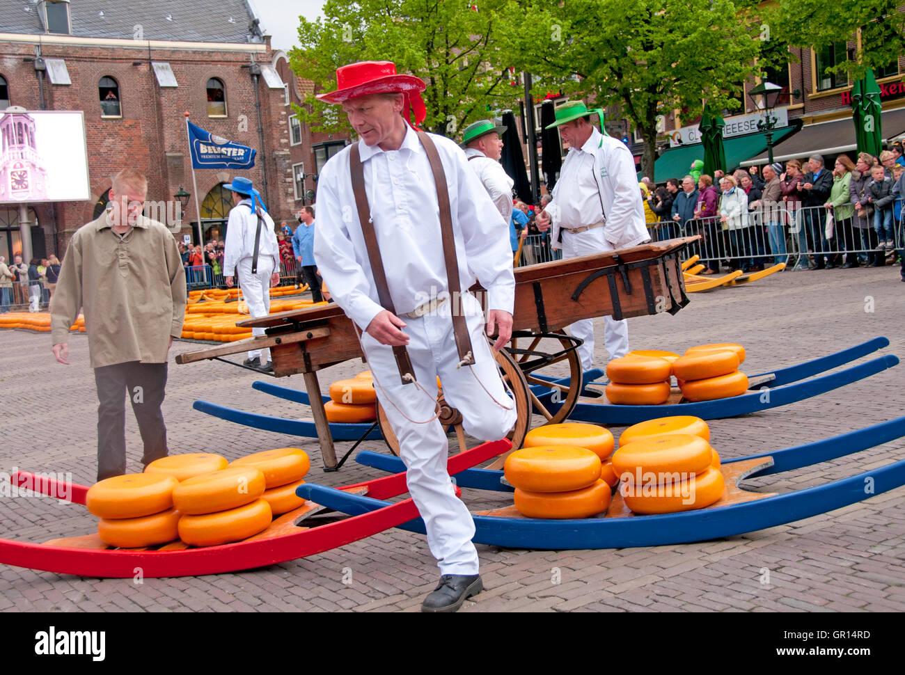 In Olanda il mercato del formaggio di Alkmaar, vettori di trasporto pesante i formaggi su slitte di legno chiamato Immagini Stock