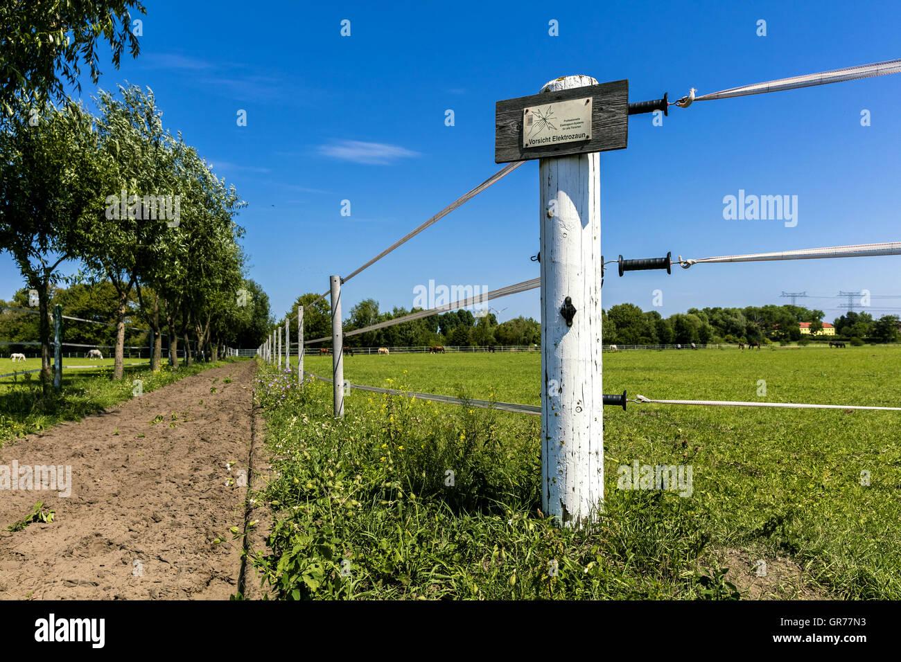 Recinzioni Elettriche Per Cavalli.Recinzioni Elettriche A Cavallo Gate Foto Immagine Stock
