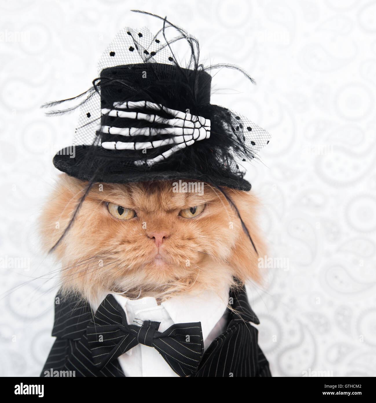 Gatto persiano con il costume di Halloween guardando la fotocamera Immagini Stock