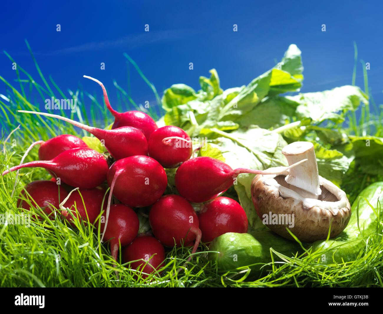 Il ravanello, funghi e cetrioli, artistico cibo ancora in vita in erba verde brillante sotto il cielo sereno Immagini Stock